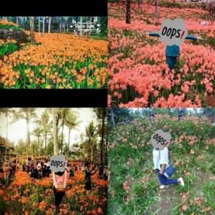 miris-taman-bunga-amarillys-yang-indah-di-pathuk-gunung-kidul-itu-rusak-di-injak-alay-er-02-pertamax7-com-2