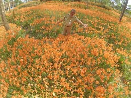 miris-taman-bunga-amarillys-yang-indah-di-pathuk-gunung-kidul-itu-rusak-di-injak-alay-er-02-pertamax7-com