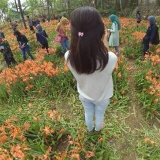 miris-taman-bunga-amarillys-yang-indah-di-pathuk-gunung-kidul-itu-rusak-di-injak-alay-er-03-pertamax7-com
