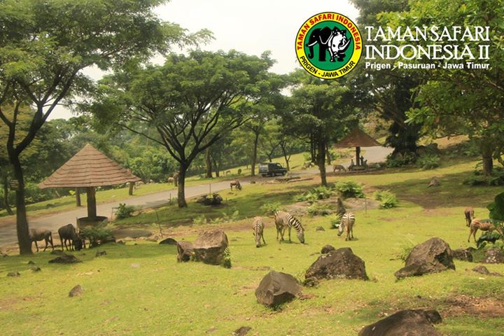 taman-safari-indonesia-2-prigen-3